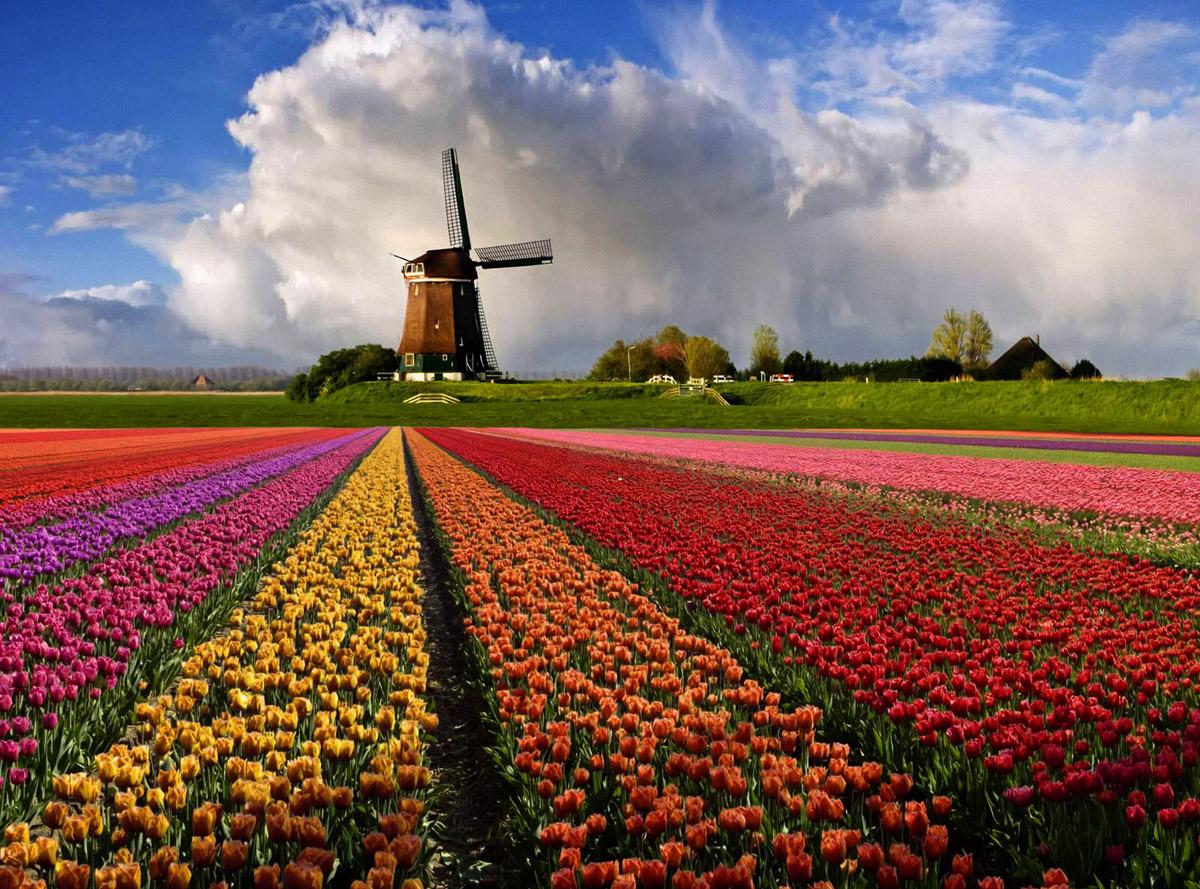 Нидерланды парк
