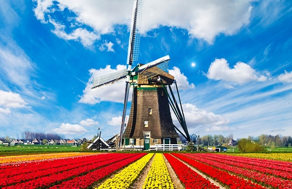 Нидерланды лого