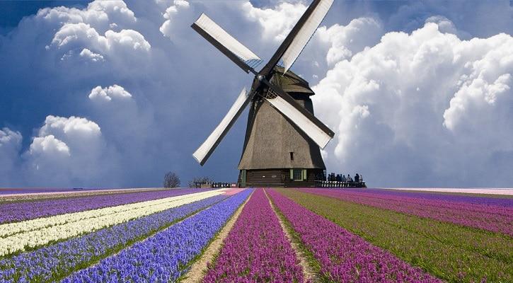 niderlandu